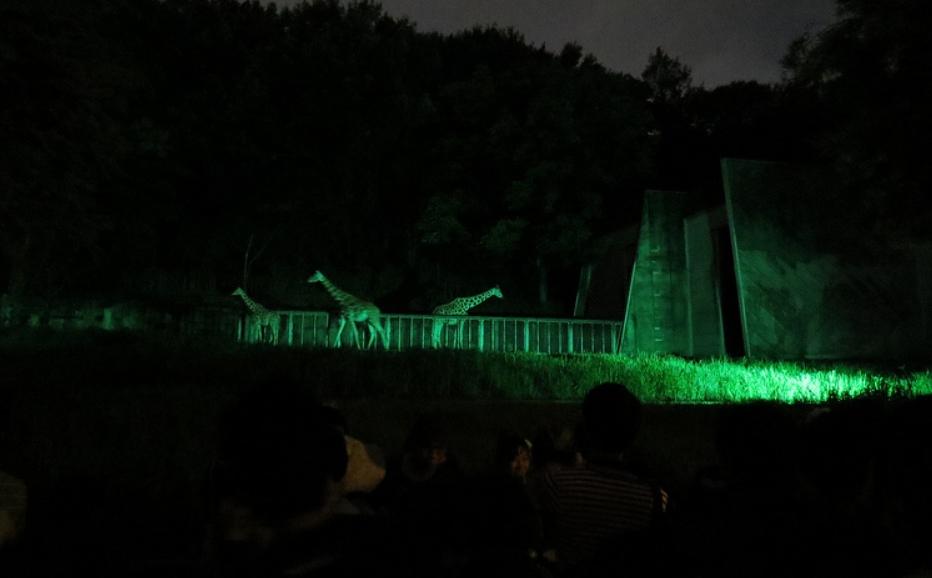 東山動物園・ナイト