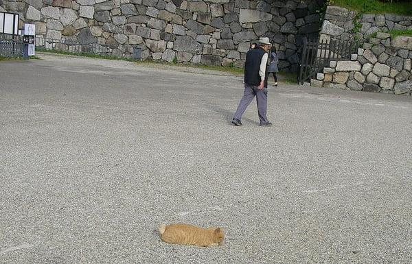 名古屋城猫